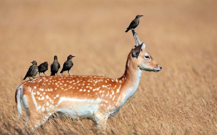 Deer Birds Bird Wallpapers Images